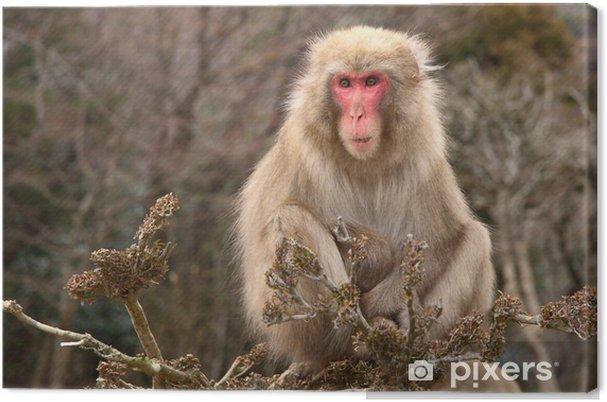 Obraz na płótnie Monkey go mężczyźni Szukam - Azja