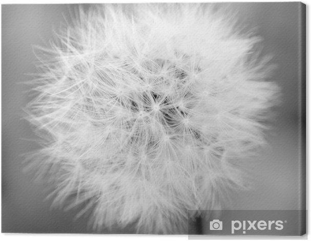 Obraz na płótnie Mono Dandelion - Przeznaczenia