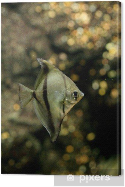 Obraz na płótnie Monofish - Zwierzęta żyjące pod wodą