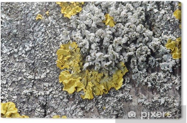 Obraz na płótnie Moos - Rośliny