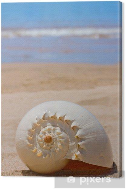 Obraz na płótnie Morze powłoki - Woda