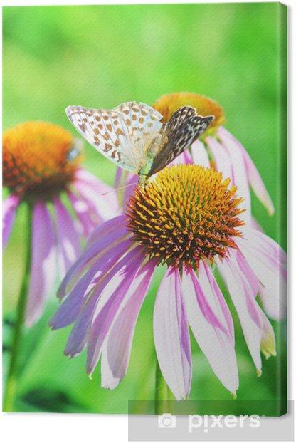 Obraz na płótnie Motyl na kwiat - Kwiaty