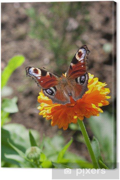 Obraz na płótnie Motyl peacock eye - Inne Inne