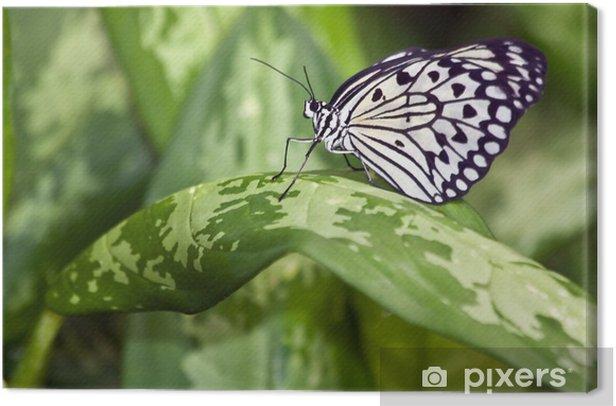 Obraz na płótnie Motyl - Inne Inne