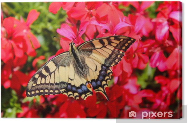 Obraz na płótnie Motyl - Tematy