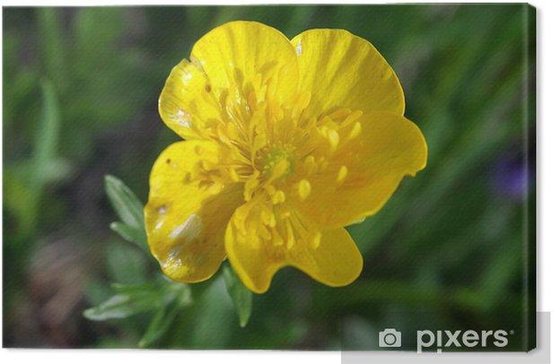 Obraz na płótnie Mountain Flower - Uroda i pielęgnacja ciała