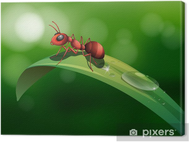 Obraz na płótnie Mrówka nad liściem - Inne Inne