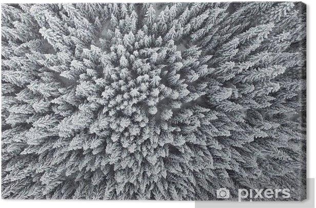 Obraz na płótnie Mrożone Las sosnowy z powietrza - Krajobrazy