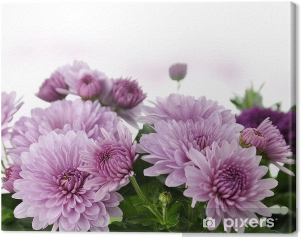 Obraz na płótnie Mum Flowers - Kwiaty