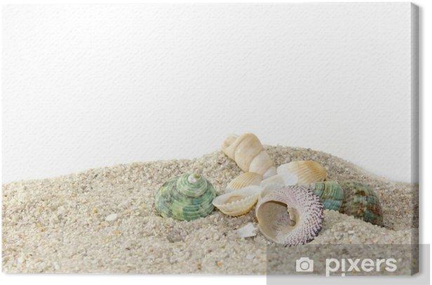 Obraz na płótnie Muszle na piasku kamieni - Zwierzęta żyjące pod wodą