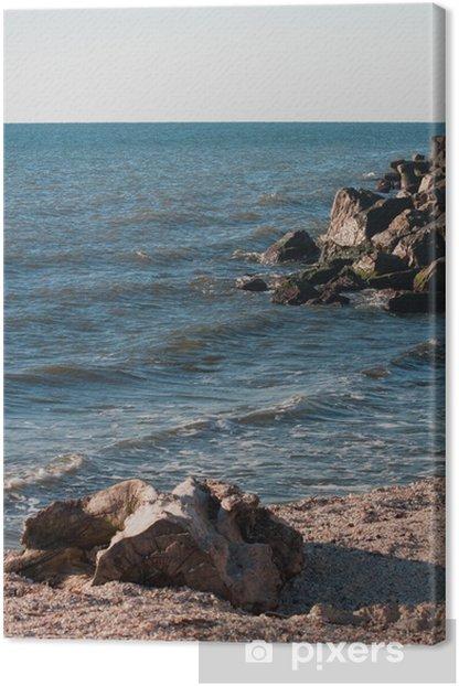 Obraz na płótnie Muszle na plaży i cięcia drzewa - Woda