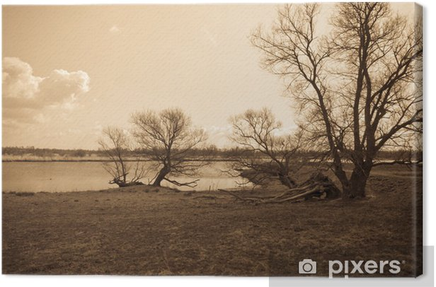 Obraz na płótnie Nagie i postrzępione drzewa wzdłuż rzeki - Pory roku