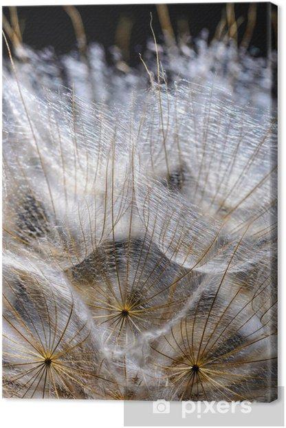 Obraz na płótnie Nasiona mniszka lekarskiego - Tematy