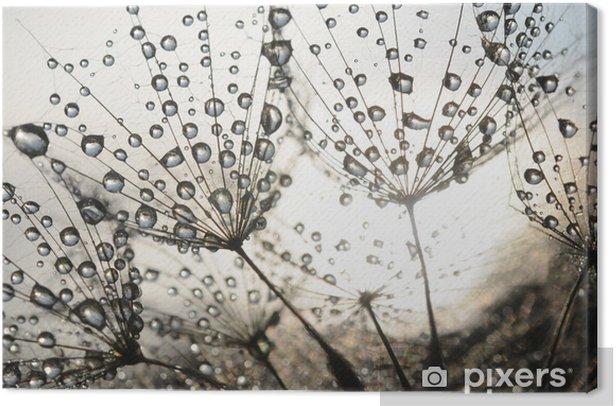 Obraz na płótnie Nasiona mniszka z kropli rosy - iStaging