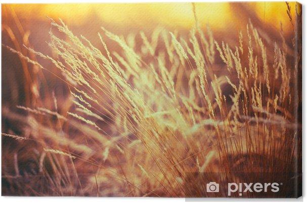 Obraz na płótnie Natura Stonowana Trawa Tło suchej trawy - Rośliny