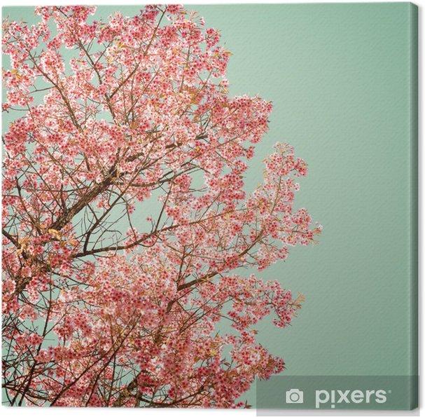 Obraz na płótnie Natura tle pięknej wiśniowego drzewa różowy kwiat na wiosnę - rocznik pastelowych filtr kolorów - Rośliny i kwiaty