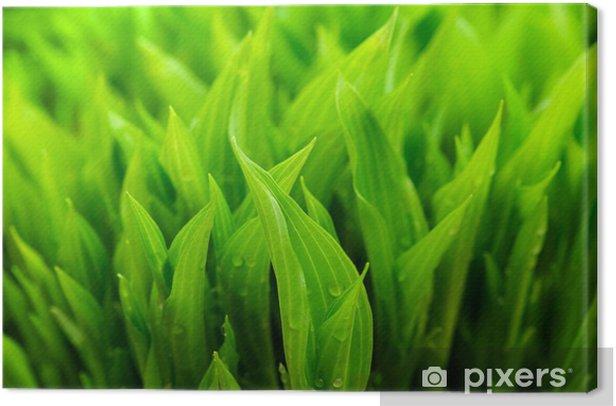 Obraz na płótnie Natura zielonym tle - Pory roku