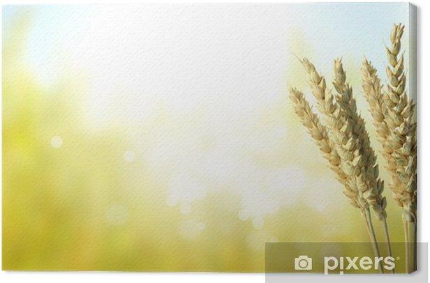 Obraz na płótnie Natura - Nasiona