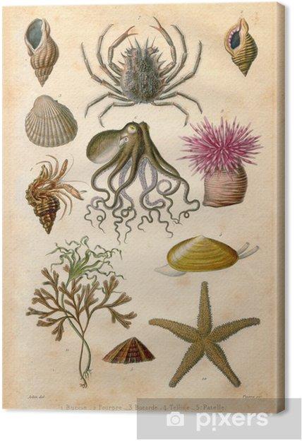 Obraz na płótnie Natural History: Sea Bed - Zwierzęta żyjące pod wodą
