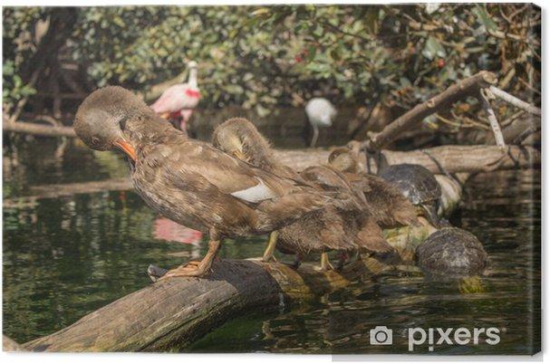 Obraz na płótnie Naturaleza - Ptaki