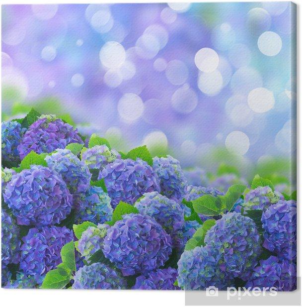 Obraz na płótnie Niebieski Hortensia kwiaty. - Kwiaty