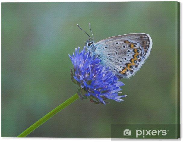 Obraz na płótnie Niebieski motyl na niebieski kwiat - Inne Inne