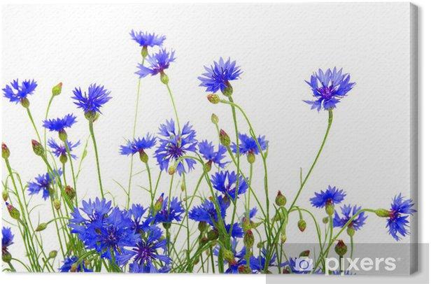 Obraz na płótnie Niebieskie chabry - Chabry