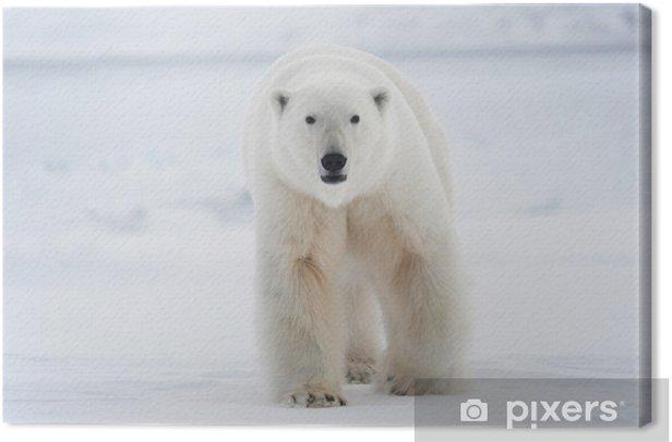 Obraz na płótnie Niedźwiedź polarny - Tematy