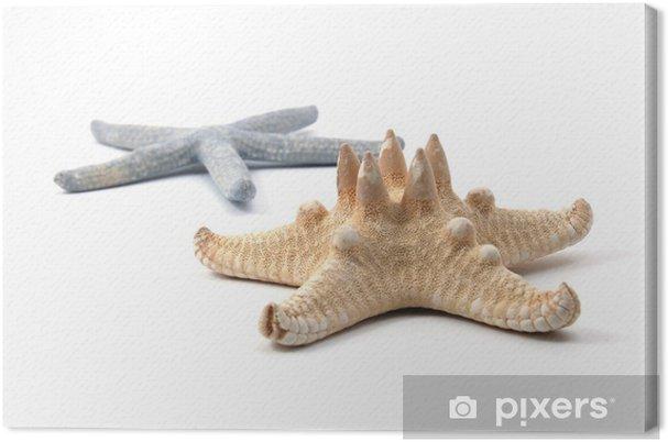Obraz na płótnie Niektóre muszle z oceanu wyizolowanych na białym tle - Inne Inne