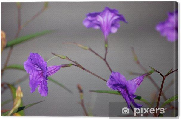 Obraz na płótnie Niezidentyfikowany kwiat - Kwiaty