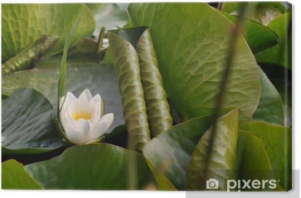 Obraz na płótnie Ninfea - Kwiaty