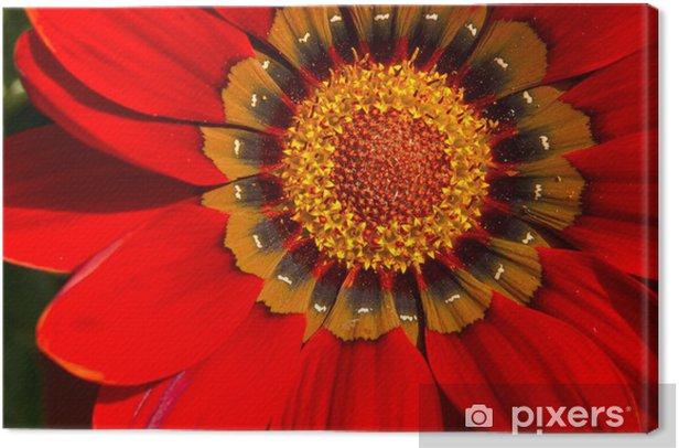 Obraz na płótnie Noon-kwitnienia - Kwiaty