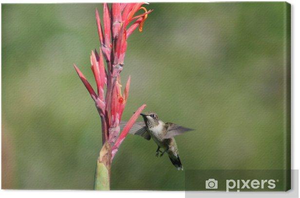 Obraz na płótnie Nucąc ptak w locie - Natura i dzicz