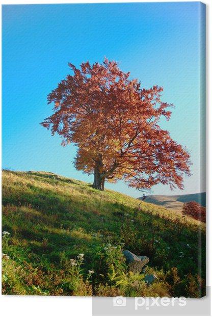 Obraz na płótnie Obraz czerwony jesienią drzewa na wzgórzu - Lasy