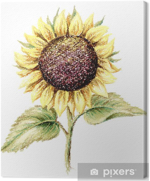 Obraz na płótnie Obraz, pastel, słonecznik - Rośliny