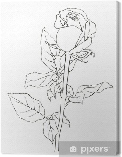 Obraz na płótnie Obraz róży, szkic z natury, ilustracji wektorowych - Kwiaty