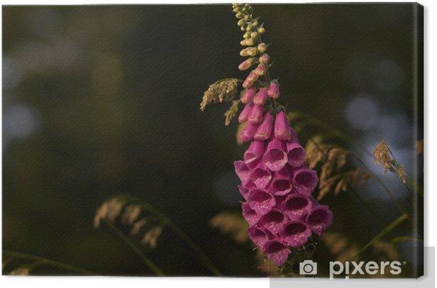 Obraz na płótnie Obróć fingerhut - Kwiaty