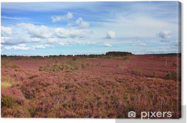 Obraz na płótnie Obszary kwitnienia wrzosu w Szkocji - Wrzos