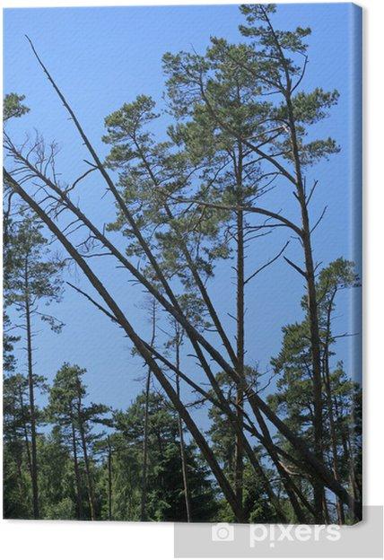 Obraz na płótnie Ociężale drzewa spada w lesie - Ekologia