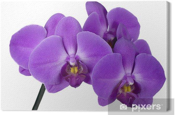 Obraz na płótnie Oddział orchidea - Naklejki na ścianę