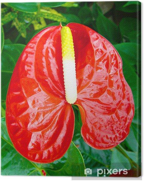 Obraz na płótnie Ogon kwiat - Dom i ogród