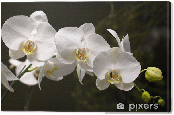 Obraz na płótnie Ogród botaniczny sito, Orchid - Tematy