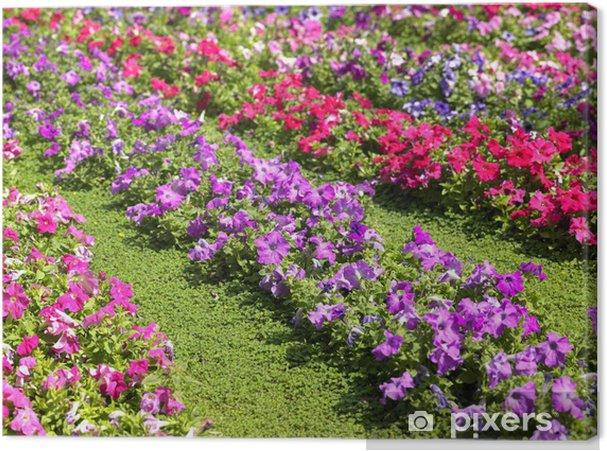 Obraz Na Plotnie Ogrod Kwiaty Pixers Zyjemy By Zmieniac