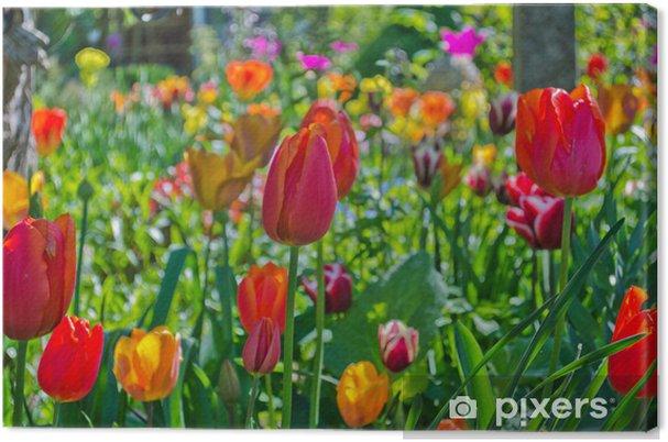 Obraz na płótnie Ogród z tulipanów w wielu kolorach - Pory roku