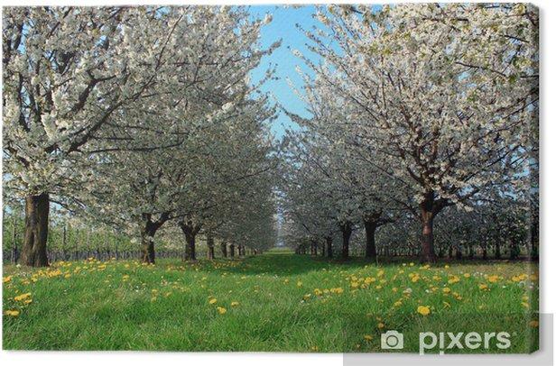 Obraz na płótnie Ogród - Rośliny