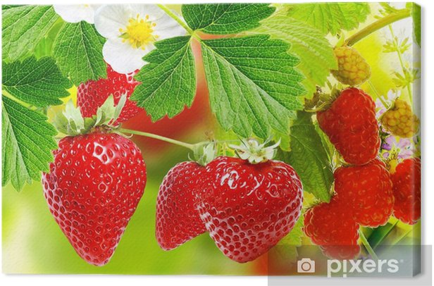 Obraz na płótnie Ogrodnictwo truskawki i maliny - Jedzenie