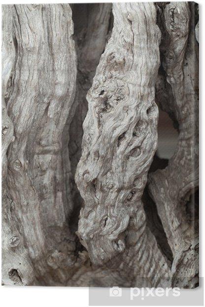 Obraz na płótnie Olive-tree trunk. - Europa