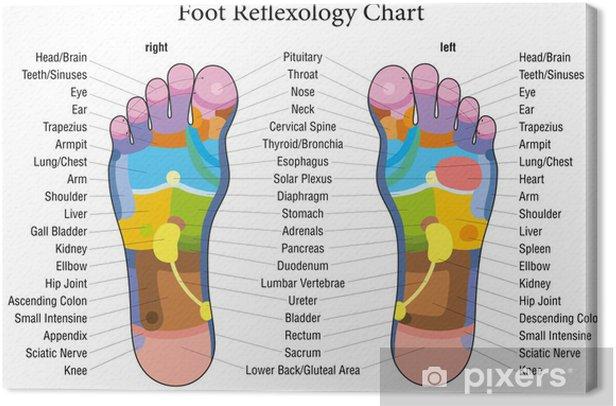 Obraz na płótnie Opis wykresu refleksologia stóp - Uroda i pielęgnacja ciała