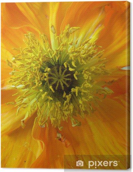 Obraz na płótnie Orange_poppy01 - Kwiaty