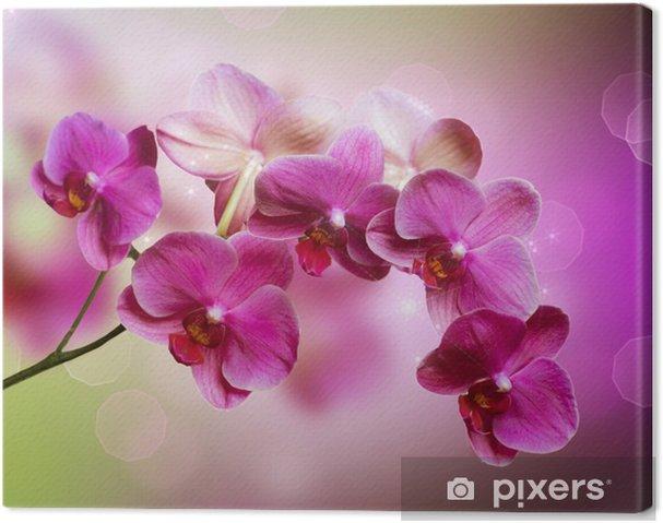 Obraz na płótnie Orchidea -